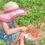 Colhendo morangos na fazenda Whittamore's