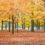 #VidaEmTO: meus programas favoritos no outono em Toronto