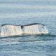 Passeio para observação de baleias em Victoria